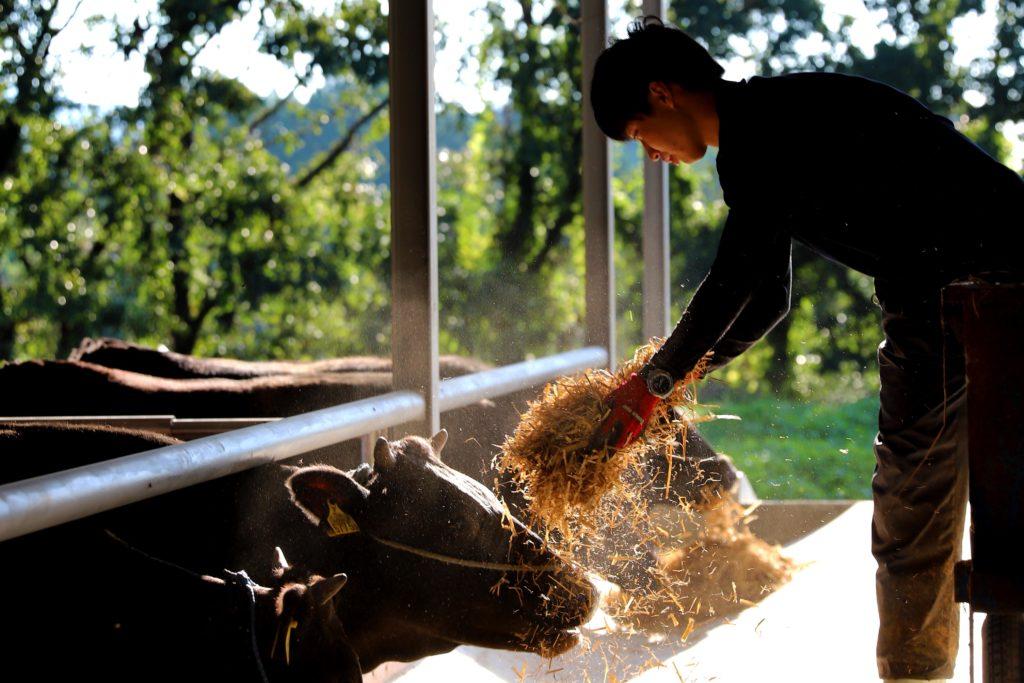 坂元牛は良質の草をたくさん食べます